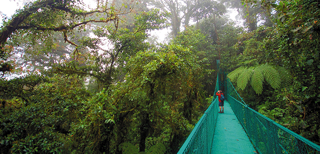 Paisaje del bosque nuboso con turista sobre una puente, tomando fotografías